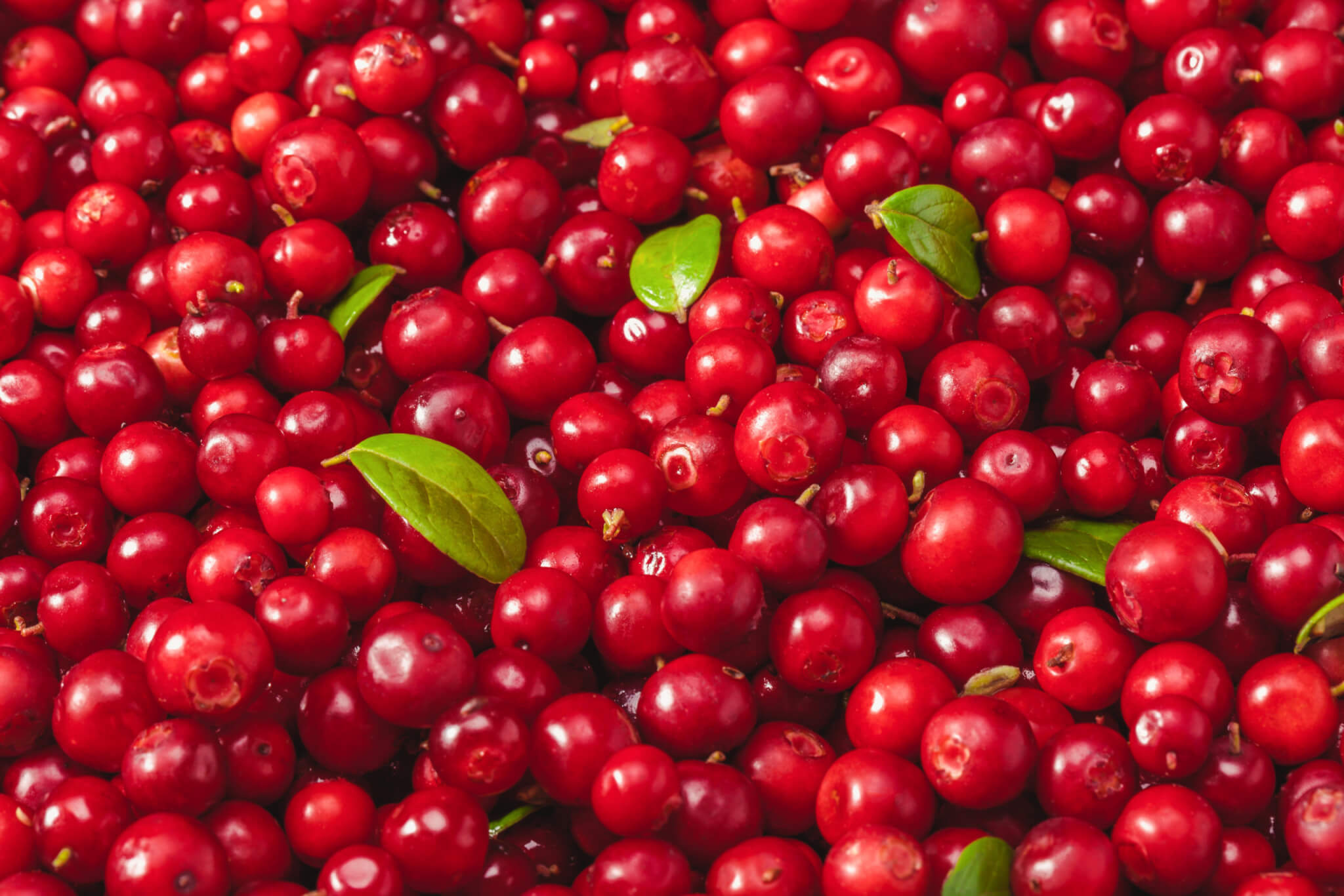 Organic Cranberry Juice Concentrate